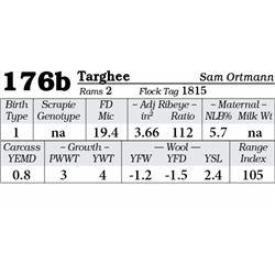 Lot 176b - Targhee