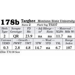 Lot 178b - Targhee