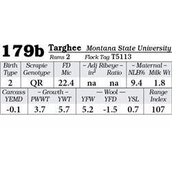 Lot 179b - Targhee