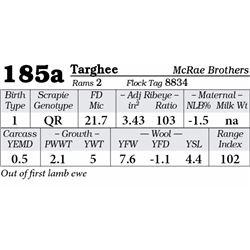 Lot 185a - Targhee