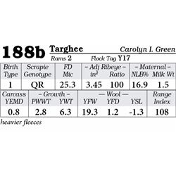 Lot 188b - Targhee