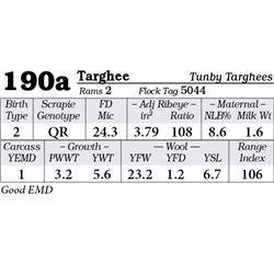Lot 190a - Targhee