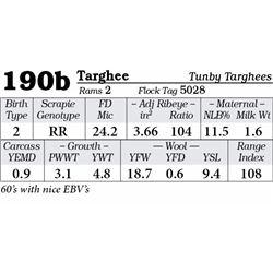 Lot 190b - Targhee