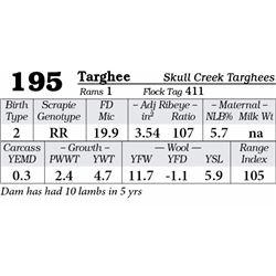 Lot 195 - Targhee
