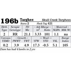 Lot 196b - Targhee