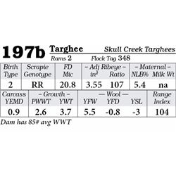 Lot 197b - Targhee