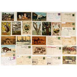 Montana Animal Postcard Collection