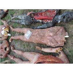 ZOMBIE AUTOPSY DEAD BLOODY ROTTEN ZOMBIE BODY 08