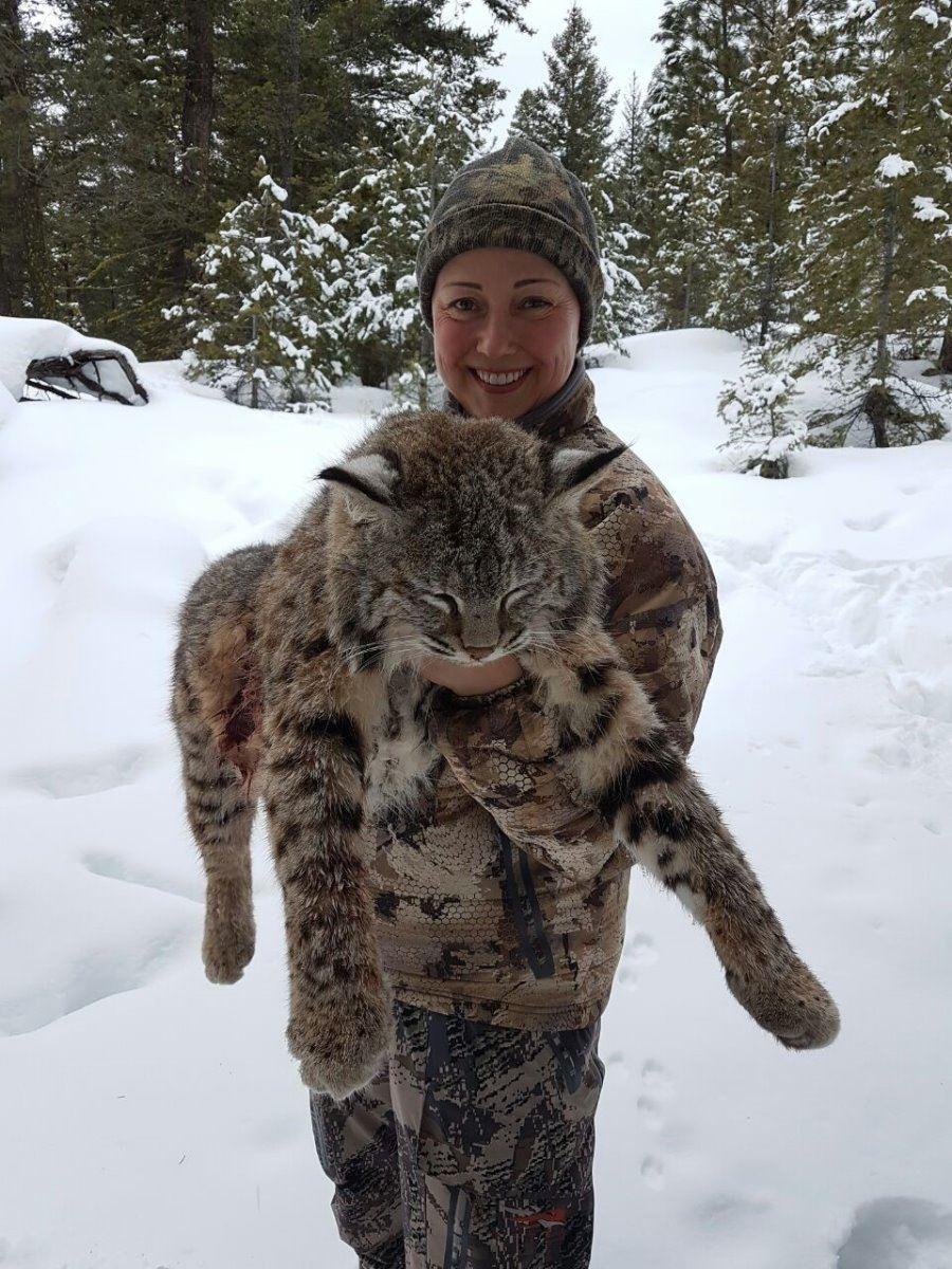 BC Moose Hunting, Black Bear and Cougar Lynx Hunts BC ... |Lynx Hunting With Hounds