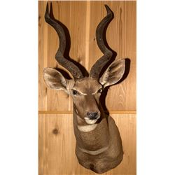 Lesser Kudu Shoulder Mount