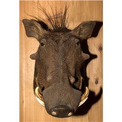 Warthog Shoulder Mount