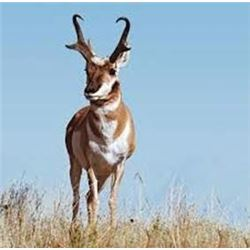 Utah State Conservation Tag #189, Pronghorn Antelope, Pine Valley Unit