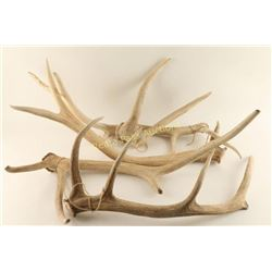 Lot of 5 Antlers
