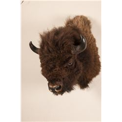 Buffalo Head Mount