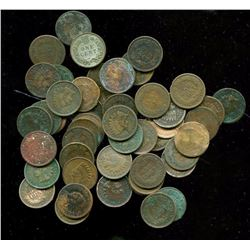 Lot of 50 Indian Head Cents- Mixed