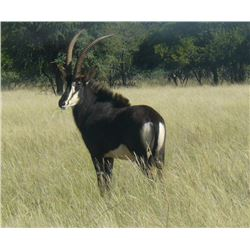 10-Day Sable Hunt for One Hunter in the Limpopo Province of South Africa - Includes Trophy Fee