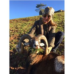 4-Day European Mouflon Hunt for One Hunter and One Non-Hunter in Austria - Includes Trophy Fee
