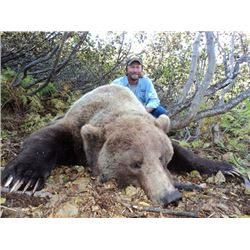 10-Day Baited Grizzly Bear Hunt for One Hunter in Alaska