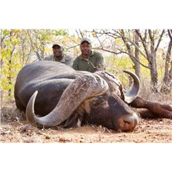 7-Day Cape Buffalo Hunt for One Hunter in Mozambique - Includes Trophy Fee
