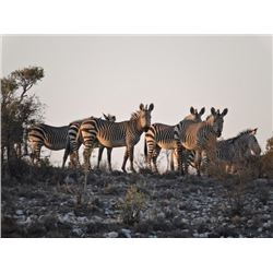 7-day Namibia Safari with $10,000 Credit Towards Trophy Fees with Author James Mellon for One Hunter