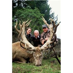 5-day New Zealand Red Deer up to 419 SCI Hunt and Fishing Trip for One Hunter and One Observer