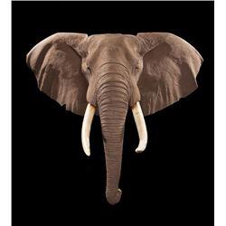 Elephant Reproduction Shoulder Mount