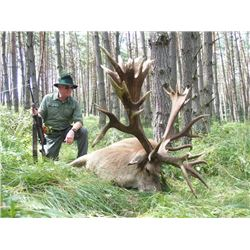 5-day Austria Red Deer, Fallow Deer Hunt and Driven Wild Boar Hunt for Two Hunters