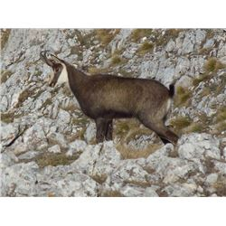 5-day Macedonia Balkan Chamois Hunt and Sightseeing Trip for One Hunter and One Observer
