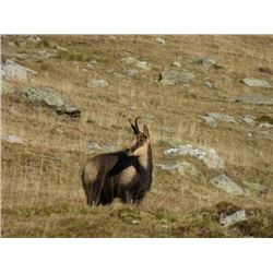 5-day Spain Pyrenean Chamois Hunt for 2 Hunters and 2 Observers