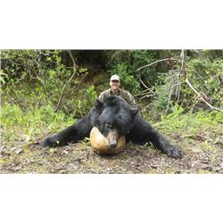 5-day British Columbia Black Bear Hunt and Full-Body Taxidermy Mount for One Hunter