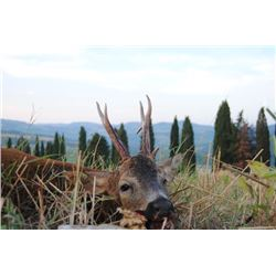 5-day Italy European Roe Deer and Chamois Hunt for Two Hunters