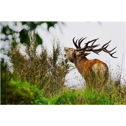 6-day New Zealand Gold-Medal Red Stag and Trophy Fallow Deer Hunt for Two Hunters and Two Observers