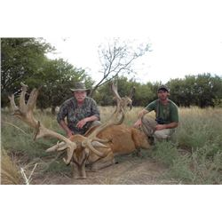 6-day Argentina Big Game Hunnt and High Volume Dove Hunt for Three Hunters