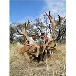4-day/5-night Argentina Red Stag and Blackbuck Hunt for One Hunter and One Observer