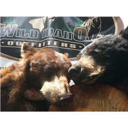 5-day Idaho Black Bear Hunt for Two Hunters