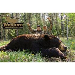 5 1/2-day Saskatchewan Black Bear Hunt for One Hunter