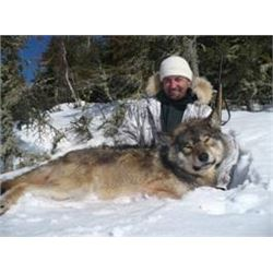 TROPHY CANADIAN WOLF HUNT