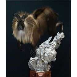 $2500 Taxidermy Credit from Dan Martin, Owner and Master taxidermist of Reflections of the Wild
