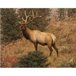 September Elk