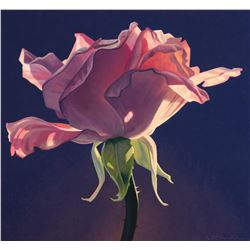 Dust Rose