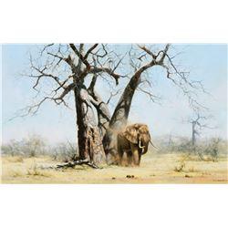 Old George Under His Favorite Baobab Tree