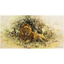 Lion in Thicket