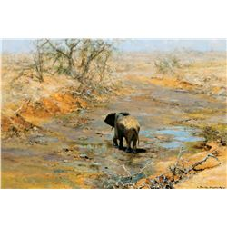 Elephant in River Bed