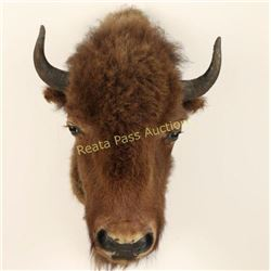 Young Buffalo Head Mount