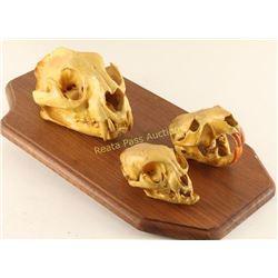 3 Skull Mount