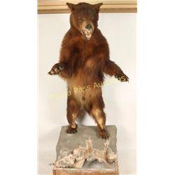 Full Mount Bear