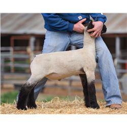 Hobbs Show Lambs