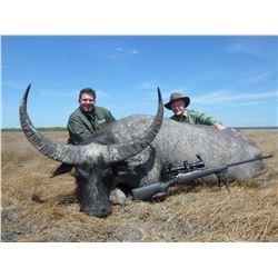 Trophy Water Buffalo Hunt w/Iridium Go! Sat Phone + Medical Membership