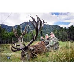 Red stag hunt for one hunter and one observer with Wilderness Quest New Zealand (5 days/4 nights)