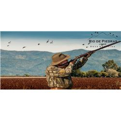 High volume dove hunt for 3 in Cordoba, Argentina (4 days, 3 nights)